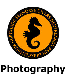 Diving in Hurghada with Seahorse Divers, Red Sea, Egypt. Underwater photography
