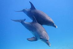 Seahorse Divers, Hurghada, Egypte, contact