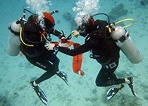 Drie-daagse Nederlandse PADI Open Water Diver duikcursus in Hurghada. Padi open water duikbrevet halen hurghada rode zee egypte, leren duiken Hurghada Egypte, Seahorse Divers, Nederlandse PADI duikschool en Nederlands PADI duikcentrum, PADI Duikopleidingen, PADI Duikcursus, PADI Duikopleiding, Hurghada, PADI Open Water Diver duikcursus Hurghada egypte