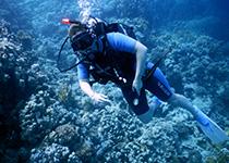 PADI Scuba Diver duikbrevet halen, Hurghada, Rode Zee, Egypte. Seahorse Divers, Nederlands PADI duikcentrum en Nederlandse PADI duikschool. Je PADI Scuba Diver duikbrevet halen in Hurghada doe je met Seahorse Divers.
