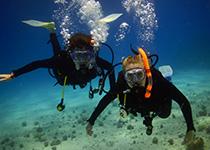 Nederlandse PADI Open Water Diver duikcursus in Hurghada. Padi open water duikbrevet halen hurghada rode zee egypte, leren duiken Hurghada Egypte, Seahorse Divers, Nederlandse PADI duikschool en Nederlands PADI duikcentrum, PADI Duikopleidingen, PADI Duikcursus, PADI Duikopleiding, Hurghada, PADI Open Water Diver duikcursus Hurghada egypte, Padi Hurghada, Egypte