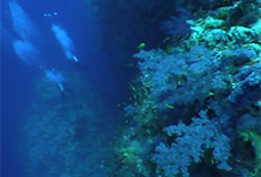 PADI Specialties Hurghada, Rode Zee, Egypte. Leren duiken Hurghada Egypte, Nederlandse PADI duikcursus, duikcursus Hurghada, Hurghada, Deep Diver Specialty