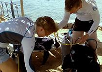 PADI Open Water Diver duikbrevet halen, Hurghada, Rode Zee, Egypte. Seahorse Divers, Nederlands PADI duikcentrum en Nederlandse PADI duikschool. Je PADI Open Water Diver duikbrevet halen in Hurghada doe je met Seahorse Divers.