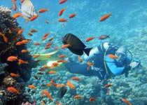 Leren duiken Hurghada Egypte, Nederlandse PADI duikcursus, Hurghada, PADI Peak Performace Buoyancy Specialty Hurghada, Rode Zee, Egypte