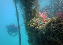 PADI Specialties Hurghada, Rode Zee, Egypte. Seahorse Divers, Nederlandse PADI duikschool, duikcursus Hurghada, PADI Specialty Hurghada