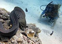 Duikkaart hurghada, Duikkaarten hurghada, Duikplekken hurghada, Rode Zee, Egypte, Duiken in Hurghada met Seahorse Divers
