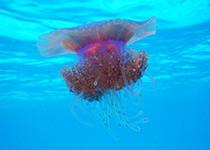 Duiken in Hurghada, Rode Zee, Egypte. Seahorse Divers, Nederlandse Padi duikschool en duikcentrum.