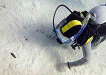 Duiken in Hurghada, Rode Zee, Egypte. Seahorse Divers, Nederlandse PADI duikschool, Hurghada, Rode Zee, Egypte