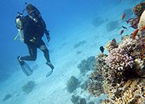 Gevaarlijke dieren Rode Zee, Egypte. Gevaarlijke vissen Rode Zee, Egypte. Seahorse Divers, Nederlandse PADI duikschool Hurghada, Rode zee, Egypte. Trekkervis
