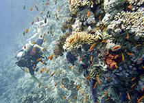 Wrak Excalibur Hurghada, wrak Suzanna Hurghada, Rode Zee, Egypte. Duiken, Wrakken en Wrakduiken in Hurghada met Seahorse Divers.