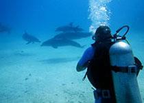 Gevaarlijke dieren Rode Zee, Egypte. Gevaarlijke vissen Rode Zee, Egypte. Seahorse Divers, Nederlandse PADI duikschool Hurghada, Rode zee, Egypte.