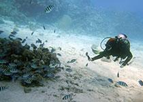 Duikvakantie in Hurghada Egypte met de Nederlandse PADI duikschool en Nederlands PADI duikcentrum Seahorse Divers. Duikvakantie hurghada tips, duikvakantie hurghada Egypte tips, duikvakantie Egypte tips, vakantie Hurghada, Rode Zee, Egypte, tips