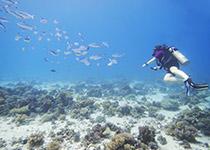 Wrak Hebat Allah, Hurghada, Rode Zee, Egypte. Duiken, Wrakken en Wrakduiken in Hurghada met Seahorse Divers.