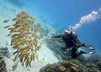 Duiken in Hurghada met Seahorse Divers, Nederlands Padi duikcentrum, Hurghada, Rode Zee, Egypte.