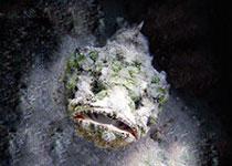 Duiken in Hurghada met Seahorse Divers, Dagelijks Duiken in Hurghada, Nederlands PADI duikcentrum en Nederlandse PADI duikschool Seahorse Divers voor geslaagde duiken tijdens je duikvakantie in Hurghada, Rode Zee, Egypte, PADI Duikopleidingen, PADI duikcursus, dagelijks duiken, wrak duiken, introductie duiken en snorkelen. PADI hurghada.