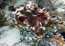 Duiken in Hurghada, Rode Zee, Egypte. Seahorse Divers, Nederlandse Padi duikschool en PADI duikcentrum.