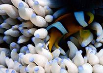 Duiken in Hurghada, Rode Zee, Egypte, Duiken Hurghada, duikvakantie in Hurghada, Seahorse Divers, Nederlands PADI duikcentrum en PADI duikschool Hurghada, Rode zee, Egypte