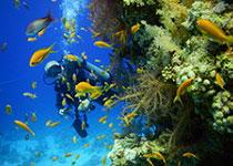 Duiken in Hurghada met Seahorse Divers, Dagelijks Duiken in Hurghada, Nederlands PADI duikcentrum en Nederlandse PADI duikschool Seahorse Divers voor geslaagde duiken tijdens je duikvakantie in Hurghada, Rode Zee, Egypte, PADI Duikopleidingen, PADI duikcursus, dagelijks duiken, wrak duiken, introductie duiken en snorkelen. PADI hurghada