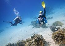 Duiken in Hurghada, Dagelijks Duiken in Hurghada, Nederlandse PADI Duikschool en Nederlands PADI Duikcentrum, Nederlandse PADI Duikcursus, voor geslaagde duiken tijdens je duikvakantie in Hurghada, Rode Zee, Egypte, Scuba duiken in Hurghada. padi hurghada