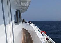 Duiken in Hurghada, Dagelijks Duiken in Hurghada, Nederlands PADI Duikcentrum en Nederlands PADI Duikschool, voor geslaagde duiken tijdens je duikvakantie in Hurghada, Rode Zee, Egypte. padi hurghada