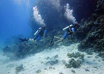 Duiken in Hurghada, Dagelijks Duiken in Hurghada, Nederlandse PADI Duikschool en Nederlands PADI Duikcentrum, Nederlandse PADI Duikcursus, voor een geslaagde duikvakantie in Hurghada, Rode Zee, Egypte