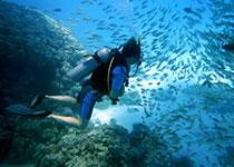 Duiken in Hurghada met Seahorse Divers, Dagelijks Duiken in Hurghada, Nederlands PADI duikcentrum en Nederlandse PADI duikschool Seahorse Divers voor geslaagde duiken tijdens je duikvakantie in Hurghada, Egypte, Rode Zee, PADI Duikopleidingen, PADI duikcursus, dagelijks duiken, wrak duiken, introductie duiken en snorkelen.