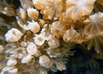 Duiken in Hurghada met Seahorse Divers, voor een geslaagde duikvakantie in Hurghada, Rode Zee, Egypte, Seahorse Divers, Nederlands PADI duikcentrum en PADI duikschool Hurghada, Rode zee, Egypte, El Fanous
