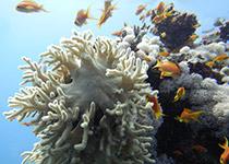 Duikplekken, duiklocaties, duikplaatsen, duikstekken in Hurghada, Abu Makadi
