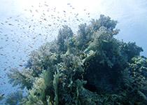 Duiken in Hurghada, Rode Zee, Egypte, Carless Hurghada, Duiken Hurghada. Seahorse Divers, Nederlands PADI duikcentrum en PADI duikschool Hurghada, Rode zee, Egypte