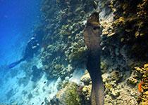 Duiken in Hurghada met Seahorse Divers, Nederlandse PADI duikschool Hurghada, Rode Zee, Egypte.