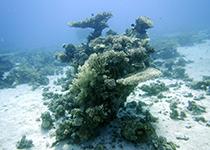 Duikplekken in Hurghada: Carless. Omschrijving en duikkaart van de duikplek Carless in Hurghada, Rode zee, Egypte. Duiken op Carless in Hurghada doe je met Seahorse Divers!