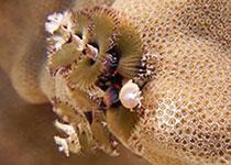 Aanbiedingen duiken Hurghada, Rode Zee, Egypte. Aanbiedingen PADI duikcursussen, Hurghada, Rode Zee, Egypte. Duiken in Hurghada doe je bij Seahorse Divers!