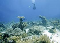 Wrakken en Wrakduiken Hurghada, Rode Zee, Egypte, Wrak El Mina Hurghada. el mina hurghada