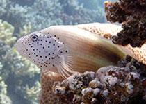 Duiksieraden, Zilveren duiksieraden, Hangers en bedels. Seahorse Divers , Nederlandse PADI duikschool, Hurghada, Rode Zee, Egypte