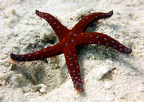 Duiken in Hurghada met Seahorse Divers, Nederlandse PADI duikschool. Duikplekken Hurghada, duikplekken hurghada, duiklocaties Hurghada, duikplaatsen Hurghada, duikstekken Hurghada, Rode Zee, Egypte