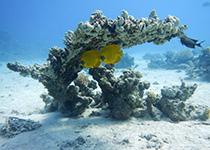 Duikplekken in Hurghada: Lighthouse. Omschrijving en duikkaart van de duikplek Lighthouse Hurghada, Rode zee, Egypte. Duiken op Lighthouse in Hurghada doe je met Seahorse Divers!