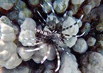 Duikplekken in Hurghada: Gota Abu Makadi. Omschrijving en duikkaart van de duikplek Gota Abu Makadi in Hurghada, Rode zee, Egypte. Duiken op Gota Abu Makadi in Hurghada doe je met Seahorse Divers!