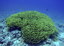 Duiken in Hurghada met Seahorse Divers, Nederlandse PADI duikschool, Hurghada, Rode zee, Egypte. Onderwaterfotografie