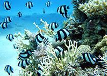 Duikplekken in Hurghada: Turtle bay. Omschrijving en duikkaart van de duikplek Turtle bay in Hurghada, Rode zee, Egypte Duiken op Turtle bay in Hurghada doe je met Seahorse Divers!