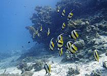 Dagelijks Duiken in Hurghada met Seahorse Divers, Nederlands PADI duikcentrum, Duiken en uitloden Hurghada, Rode Zee, Egypte.