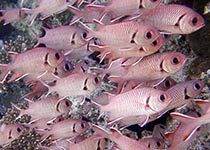 Duikplekken in Hurghada: El Aruk Gigi. Omschrijving en duikkaart van de duikplek El Aruk Gigi in Hurghada, Rode zee, Egypte. Duiken op El Aruk Gigi in Hurghada doe je met Seahorse Divers!