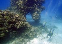 Duikplekken in Hurghada: El Aruk Maksour. Omschrijving en duikkaart van de duikplek El Aruk Maksour in Hurghada, Rode zee, Egypte. Duiken op El Aruk Maksour in Hurghada doe je met Seahorse Divers!