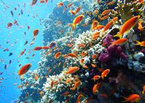 Duikplekken in Hurghada: El Fanadir. Omschrijving en duikkaart van de duikplek El Fanadir in Hurghada, Rode zee, Egypte. Duiken op El Fanadir in Hurghada doe je met Seahorse Divers!
