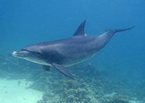 Duikplaatsen in Hurghada: Shaab El Erg. Omschrijving en duikkaart van de duikplaats Shaab El Erg in Hurghada, Rode zee, Egypte. Duiken op Shaab El Erg in Hurghada doe je met Seahorse Divers!