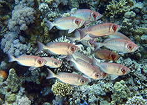Duiken in Hurghada met Seahorse Divers, Nederlands PADI duikcentrum en Nederlandse PADI duikschool Hurghada Egypte, Fotoservice Seahorse Divers Hurghada.