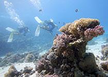 Duiken in Hurghada met Seahorse Divers. Nederlands PADI duikcentrum Hurghada, Rode Zee, Egypte.