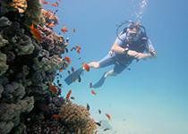 Nederlandse PADI Advanced Open Water Diver duikcursus in Hurghada. Padi advanced open water duikbrevet halen hurghada rode zee egypte, leren duiken Hurghada, Egypte, Seahorse Divers, Nederlandse PADI duikschool en Nederlands PADI duikcentrum, PADI Duikopleidingen, PADI Duikcursus, PADI Duikopleiding, Hurghada, PADI Advanced Open Water Diver duikcursus Hurghada egypte