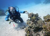 Nederlandse PADI Adventure Dive in Hurghada. Leren duiken, PADI Hurghada, Egypte, Seahorse Divers, Nederlandse PADI duikschool en Nederlands PADI duikcentrum, PADI Duikopleidingen, PADI Duikcursus, PADI Duikopleiding, Hurghada