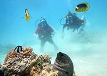 Duiken in Hurghada, Rode Zee, Egypte. Seahorse Divers, Nederlandse PADI duikschool. PADI Open Water Diver cursus in Hurghada, Wil en Pieter