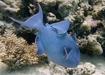 Duikplekken, duikstekken, Hurghada, duikplekken hurghada, duiklocaties Hurghada, duikplaatsen Hurghada, duikstekken Hurghada, Rode Zee, Egypte